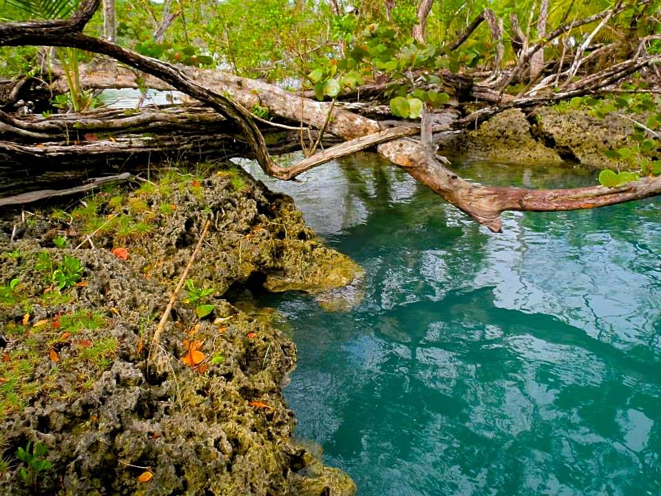 The blue lagoon connects the jungle & ocean - La laguna azul conecta a la jungla y el mar